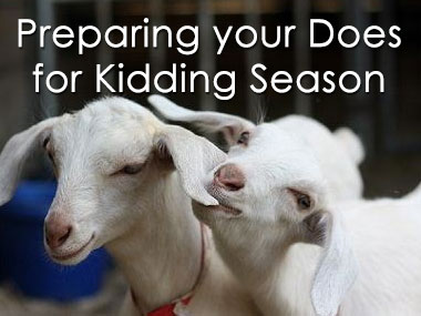 Preparing your does for kidding season
